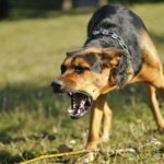 Marietta Cobb country dog bite lawyer